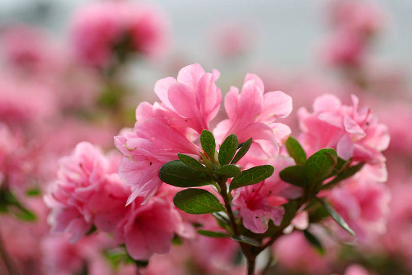 Самые необычные цветы в мире