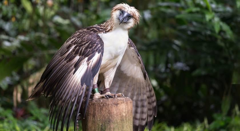 Самые опасные хищные птицы