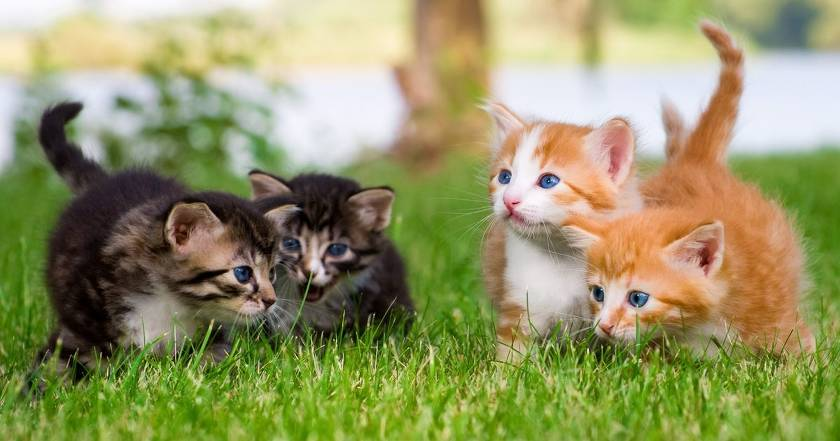 Лучшие корма для кошек премиум класса