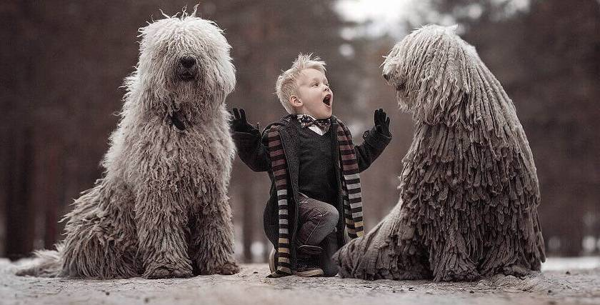 Самые дорогие породы собак