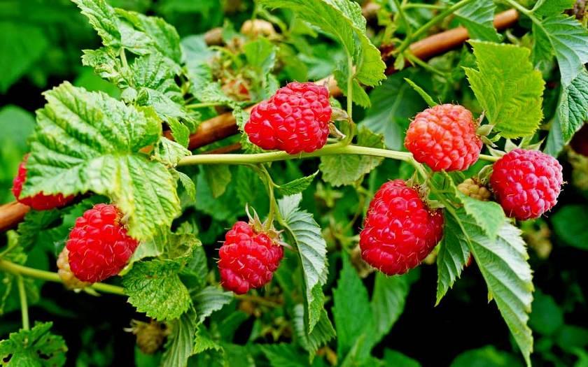 Самые полезные ягоды
