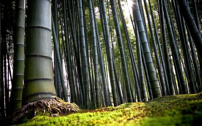 Секреты лощины Черный Бамбук